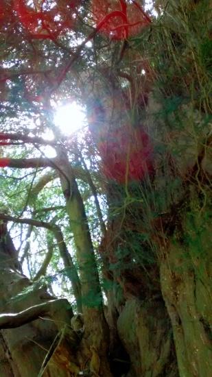 World Tree 1