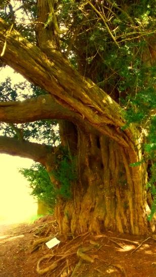 World Tree 2